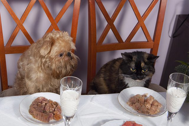 pets eating healthy