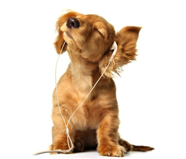 puppy listening to music