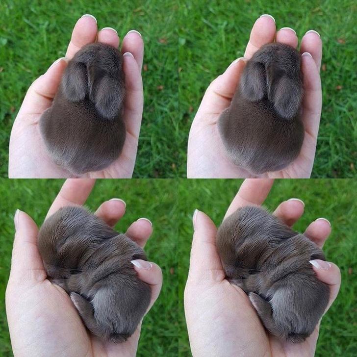 Pocket-sized animal