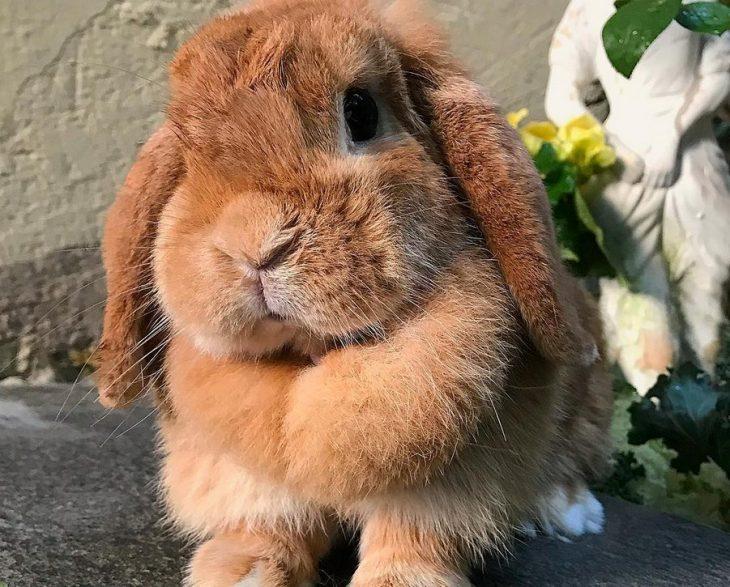 bunny praying