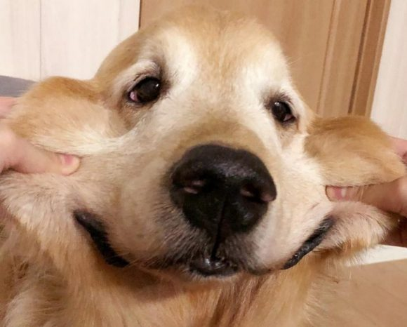 please smile dog