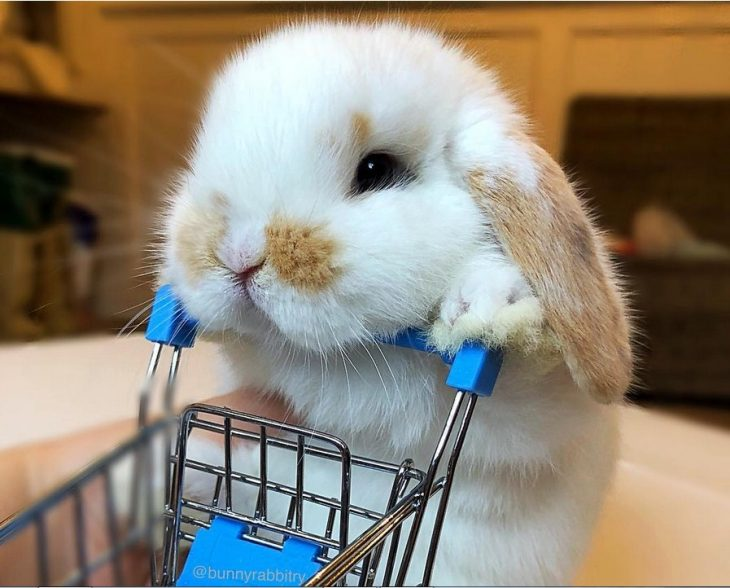 shopping buddy bunny