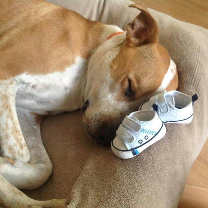 dog sleeping with baby shoes
