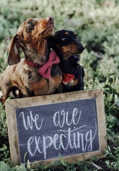 dog we are expecting