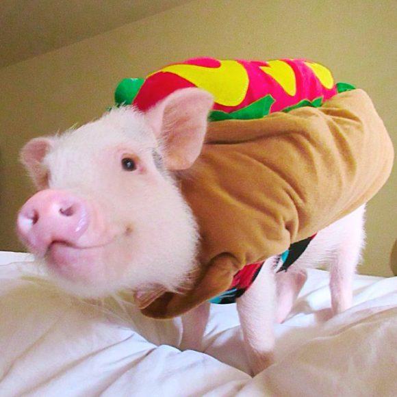 Hamlet Piggy